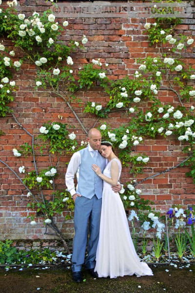 bride and groom embracing by climbing roses daniel charles photography cheshire wedding photographer